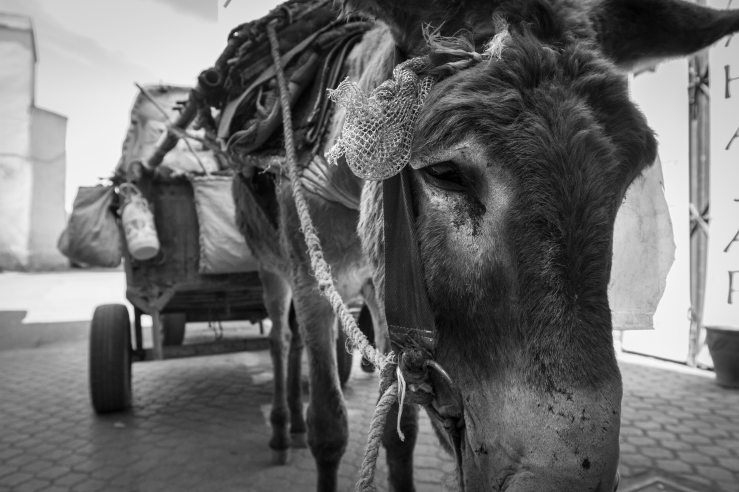 Morocco_Street09