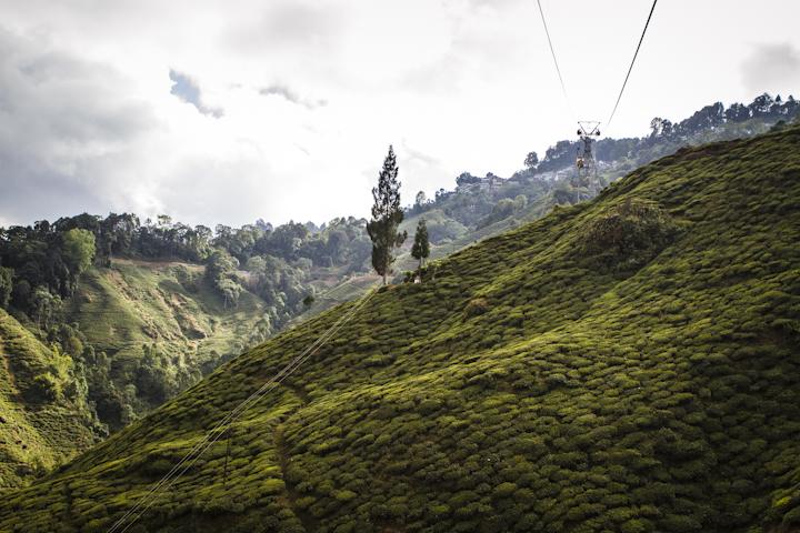 Darjeeling13