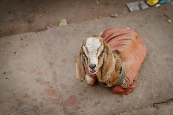 Varanasi_Street18