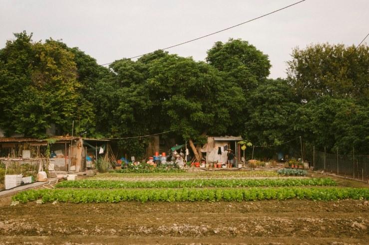 mapopo_farm_08